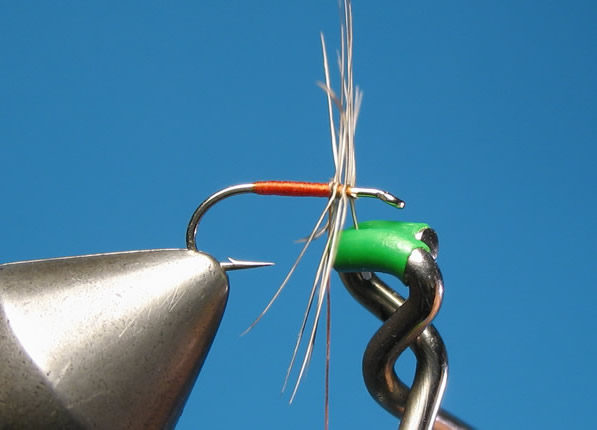 Secure the hackle by winding the thread through it and finishing with a couple wraps at the front...