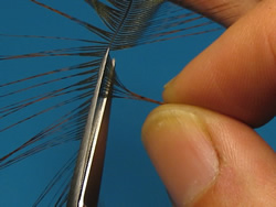 Stage 4 cutting the hackle barbs