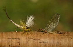 Mayfly artificial and mayfly dun on rod handle