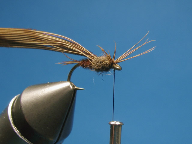Divide the tips into two equal bunches to form the legs and bring the butts of the pheasant tail fibres forward between them.