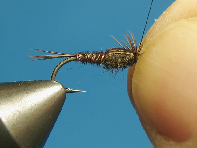 Secure the pheasant tail butts at the eye to form the wingcase.