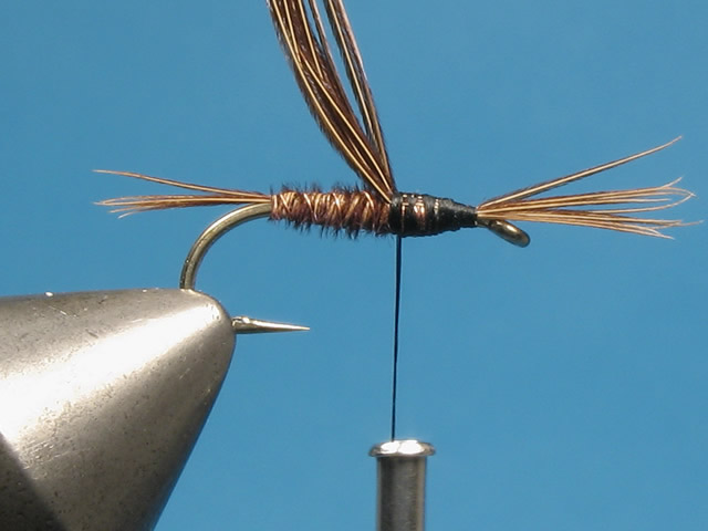 Tie in a small bunch of pheasant fibres with their tips even and pointing forward over the eye.