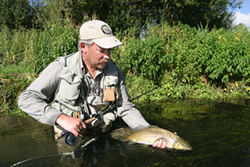 angler returning trout to water
