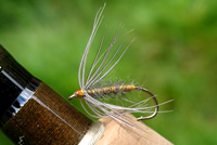 Traditional hackled dry fly