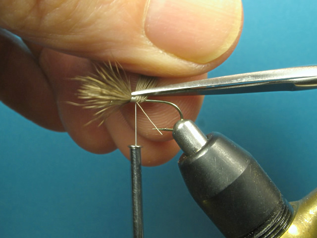Lift the butts of hair straight up and make a cut parallel to the hook shank from the back